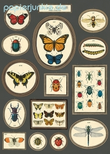 Geschenkpapier Natural History Insects, Frames